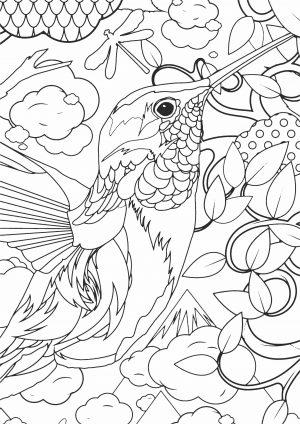 Раскраску с птичкой Калибри скачать