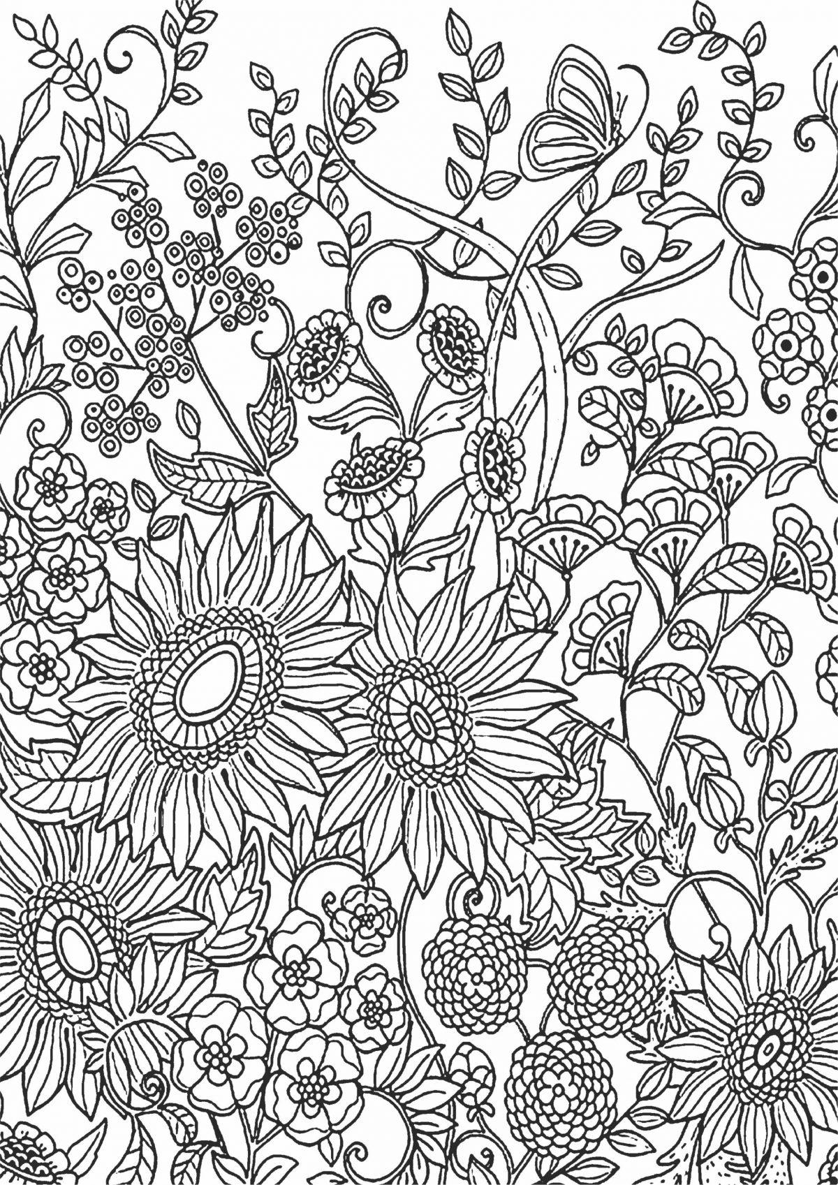 Раскраска с полевыми цветали