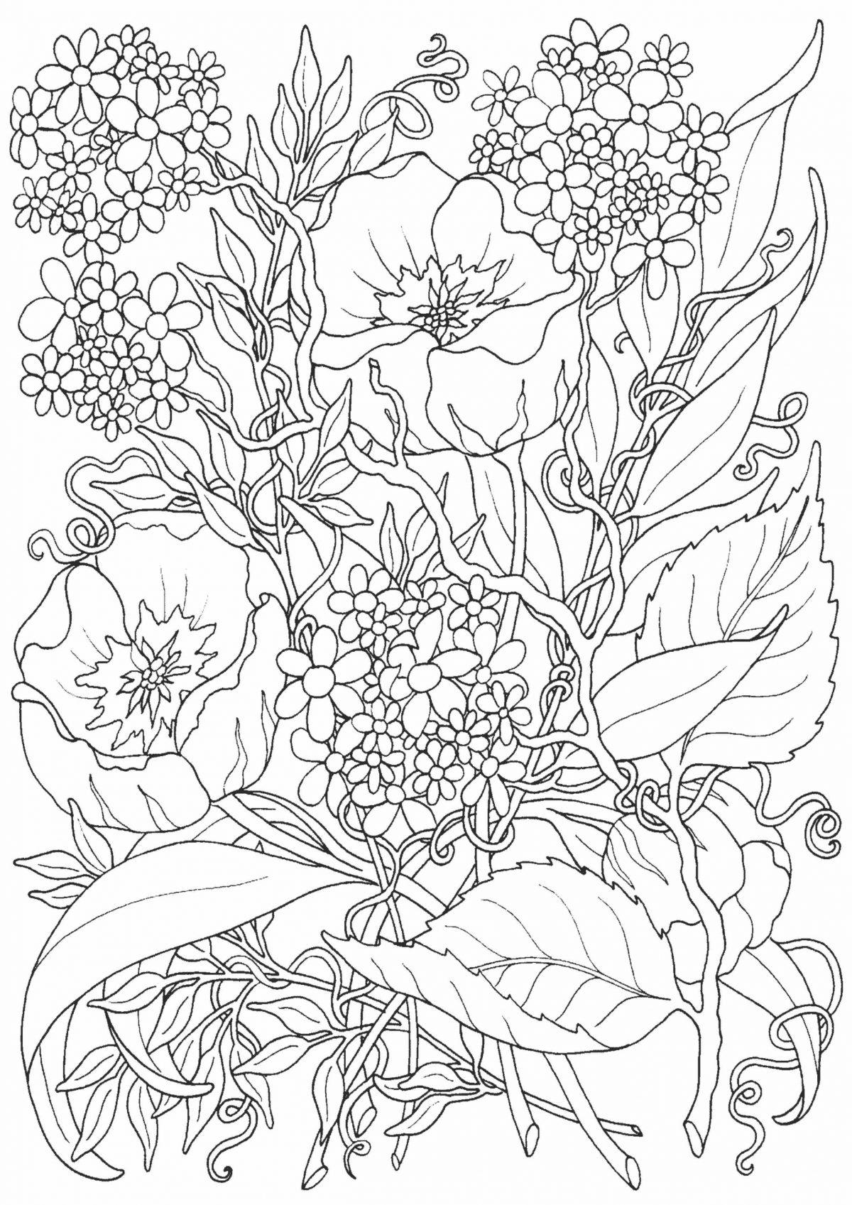 Раскраска с маковыми цветами